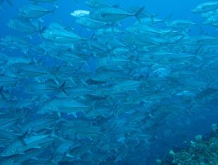宮古島のダイビングショップ「カピリナ」
